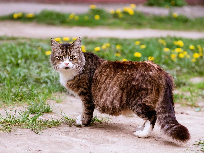 Bon à savoir sur la grossesse d'une chatte